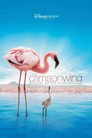 http://kezhlednuti.online/crimson-wing-mystery-of-the-flamingos-the-15361