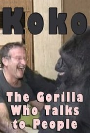 http://kezhlednuti.online/koko-the-gorilla-who-talks-to-people-55461