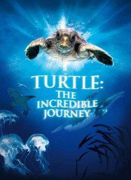 http://kezhlednuti.online/turtle-the-incredible-journey-62631