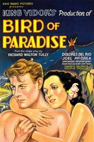 http://filmzdarma.online/kestazeni-bird-of-paradise-78782