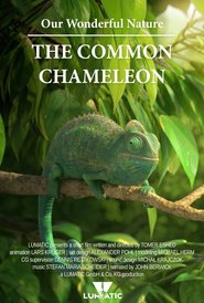 http://kezhlednuti.online/our-wonderful-nature-the-common-chameleon-96063
